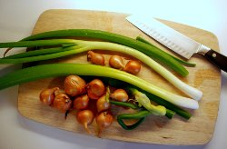 Egyptian walking onions and shallots