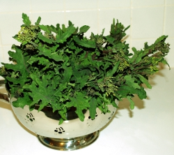 Kale flowers washed